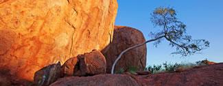 Rock with Bent Tree