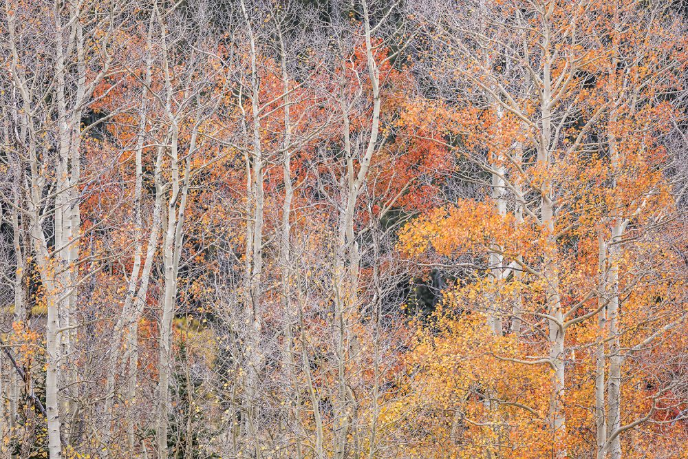 1091 White River National Forest Autumn Reds